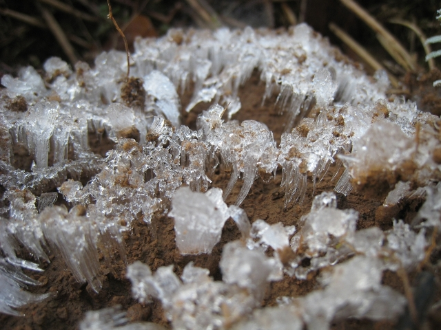 Frost2web-1
